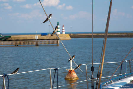 Swallows sit on the sailing rope.
