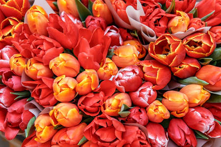 Bouquets of red, yellow tulips gifts for women. Background of tulips 写真素材