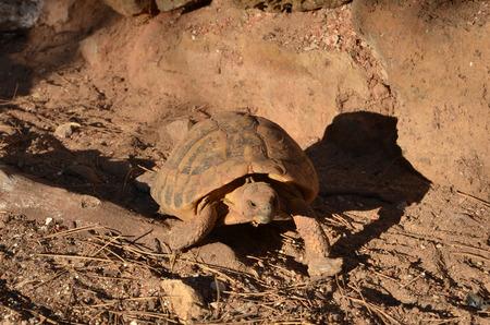 camouflaged: Camouflaged tortoise