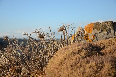 mediteranean: Dry mediteranean vegetation