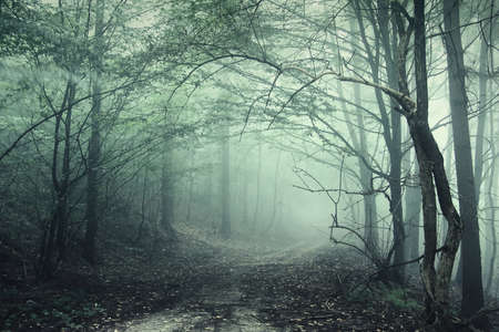 Green fog in a forest with fog and strange looking branches Stock Photo - 10261217