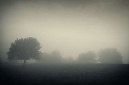 Dark autumnal landscape with a tree on a meadow and thick fog