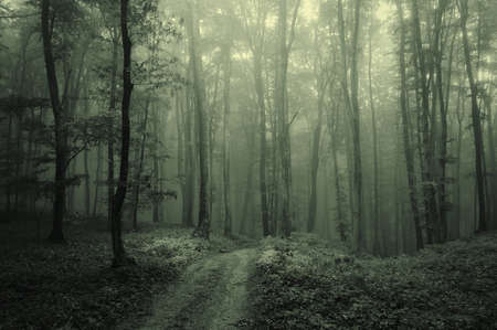 Dense fog in a dark and mysterious forest photo