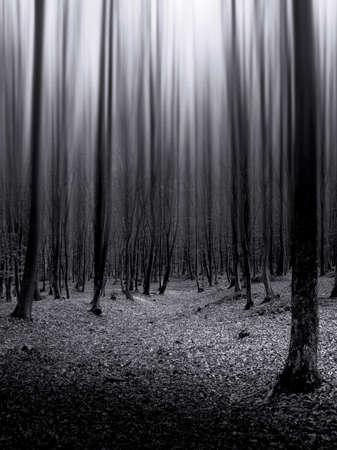 oscuro: Bosque oscuro con extra�a luz bajando de los �rboles  Foto de archivo