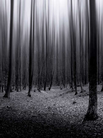 Dark forest with strange light coming down on the trees  photo