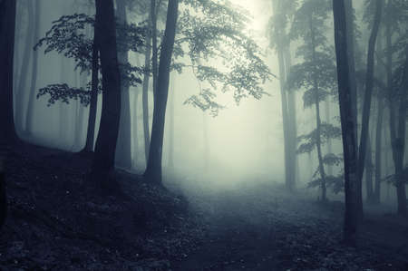 Mysterious forest with fog and trees with backlight photo