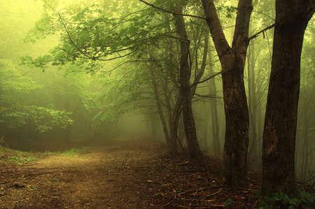 foresta: foresta verde con una luce misteriosa nebbia Archivio Fotografico