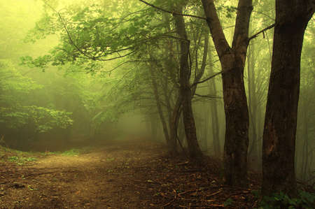 mystery woods: green forest with fog an mysterious light Stock Photo