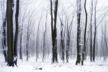 Snow in a frozen foggy forest with haze and ice Stock Photo - 10261218