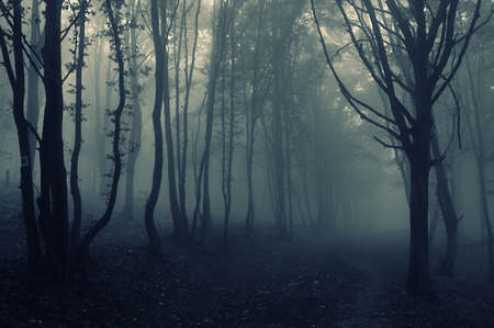 Dark foggy forest landscape with trees in the fog Stock Photo