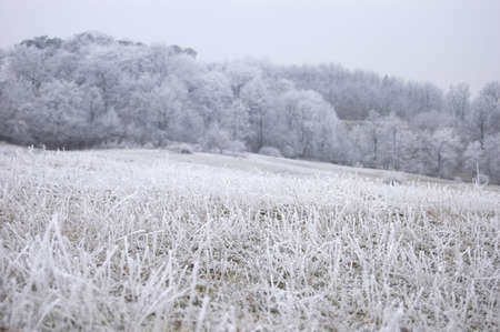 Frozen grass on a frozen hill in winter with fog and a forest visible in the background