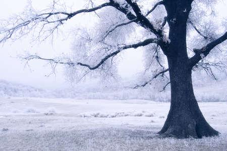 frozen blue tree on a frozen meadow with blue fog
