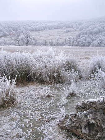Frozen winter landscape with ice, frozen plants and fog