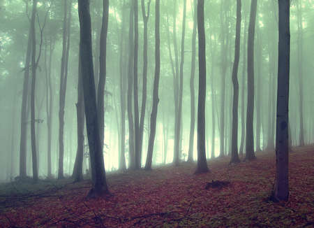 Green fog in a beautiful forest in autumn