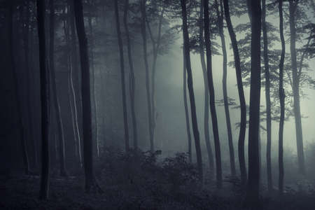Fog in a dark forest with light trough the trees photo