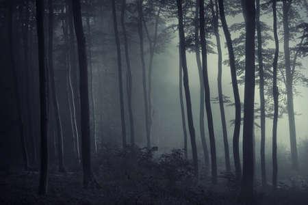 uomo sotto la pioggia: Nebbia in una selva oscura con la luce attraverso gli alberi Archivio Fotografico