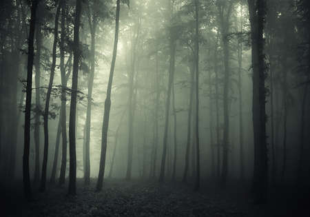 Trees in a foggy forest and a strange light