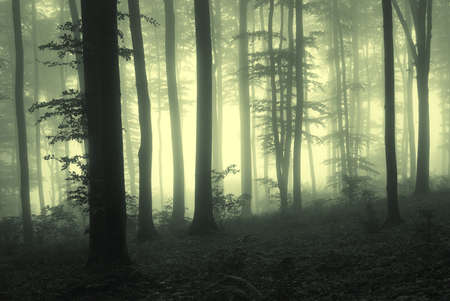 light between trees in a forest with fog at sunrise Stock Photo