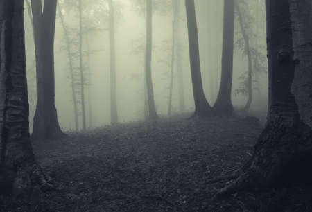 Dense fog in a mysterious forest with strange looking trees
