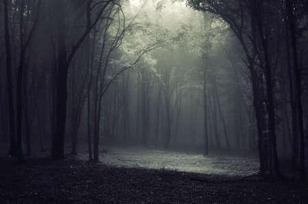 Étrange lumière mystérieuse dans une forêt avec des arbres et le brouillard