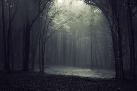 Strange mysterious light in a forest with trees and fog photo