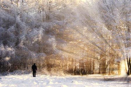 enero: Beautiful congelado bosque, con rayos de sol y hombre Foto de archivo