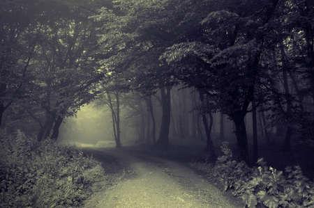 oscuro: A trav�s de la carretera un bosque oscuro con niebla  Foto de archivo