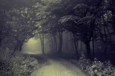 Road trough a dark forest with fog  Stock Photo
