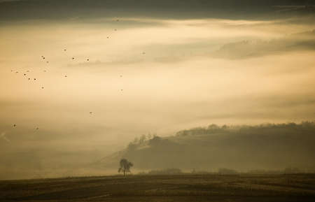 landscape with fog a tree and birds on an autumn morning Stock Photo - 10329088