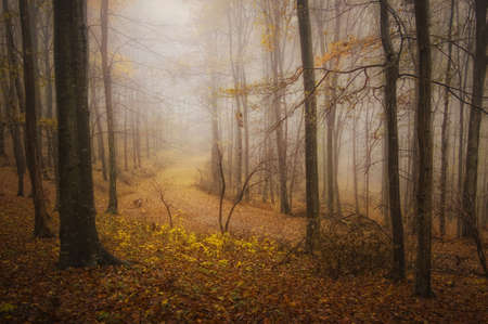 Autumn in a mysterious red foggy forest photo