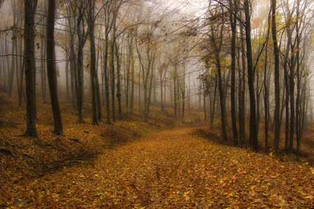 Autumn in an orange forest with fog
