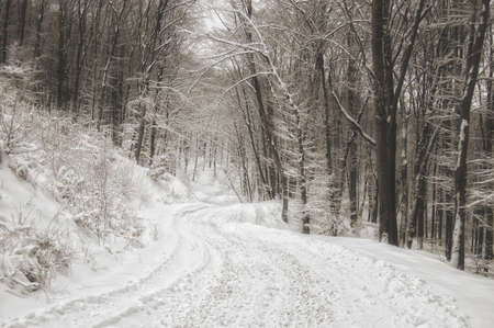 Winter road in the forest with snow Stock Photo - 10329106