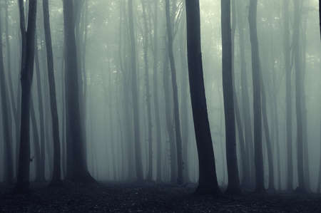 scary night: Trees in a mysterious dark forest with fog
