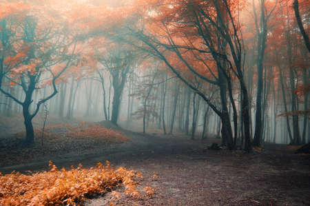 Trees with red leafs in a mysterious fantasy forest with fog
