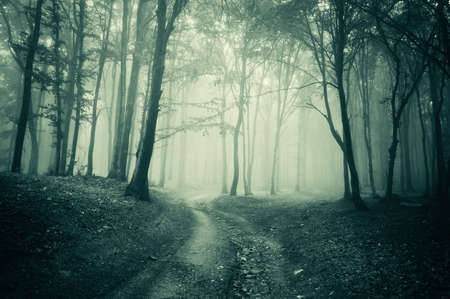 monochroom: Landschap vanuit een donker spookachtig mysterieus woud met mist Stockfoto