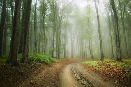 Road trough an enchanted green forest with fog and mysterious light photo