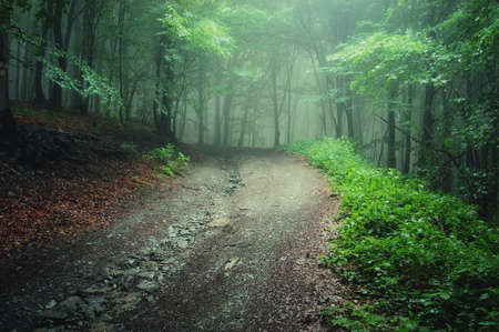 Road trough a green forest after rain, with fog visible in the background Stock Photo