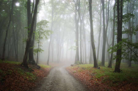 Road through a beautiful forest with fog full of mystery in autumn