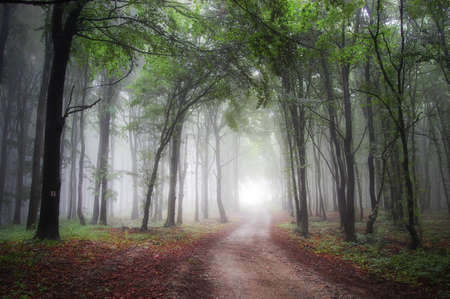 A mysterious magic forest with fog and a road trough it at the end of which light is visible in nature photo
