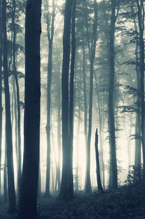 Sunrise in a mysterious dark forest with fog Stock Photo