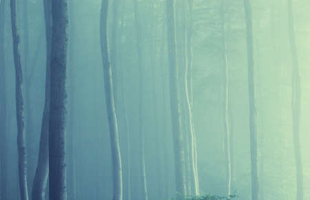 forest with colorful trees and fog in the morning photo
