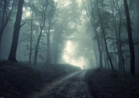 mystery woods: man walking in a green forest with fog