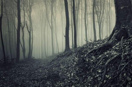 arbol raices: ra�ces de un �rbol de un bosque oscuro niebla Foto de archivo