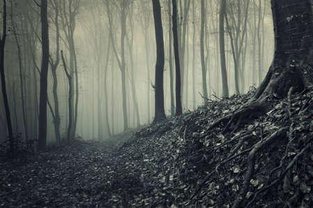 boom wortels: wortels van een boom van een mistige donker bos
