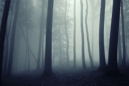 misty forest: fog in a beautiful forest with elegant beech trees Stock Photo