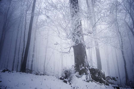 cold winter day in a frosty forest near a large tree photo