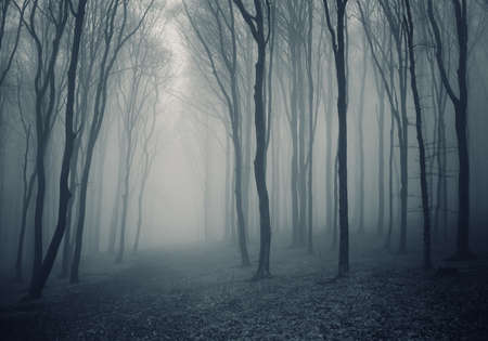 Elegant dark forest with fog Stock Photo