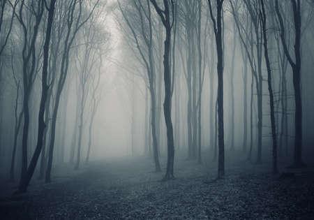 Elegant dark forest with fog photo