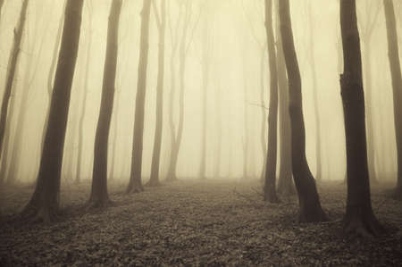golden light in a autumnal misty forest photo