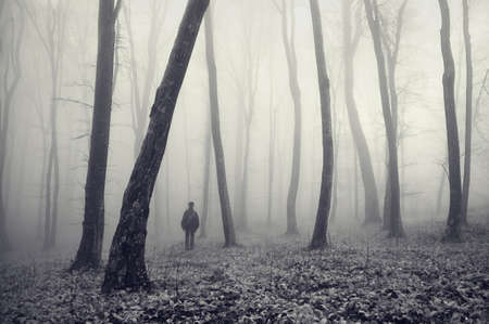 a man lost in a magical forest with fog